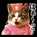 【LINEスタンプ】なめ猫 ~なめんなよ~